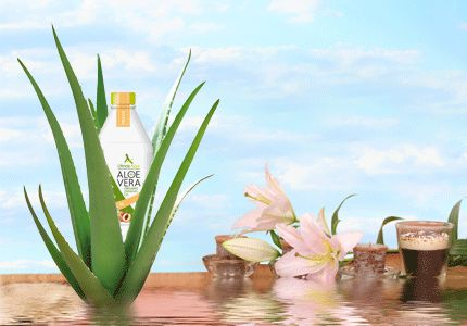 Aloe Vera Gel is produced by the Aloe Vera Plant within its fleshy toothed leaves. Aloe Vera gel would benefit you in setting the right balance into your system. Browse this site http://litinas-aloe.gr/en/ for more information on Aloe Vera Gel. Aloe Vera gels contain all of the power of the Aloe Vera plant, but in a gel format, where you can easily put them on your body quite easily.