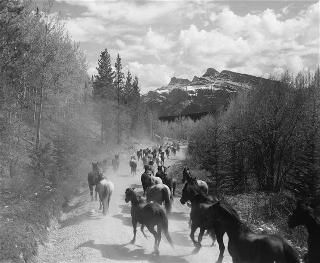 Bruno Engler Black And White Photographs  Horse Drive (Photograph) (BRUORGSH003)