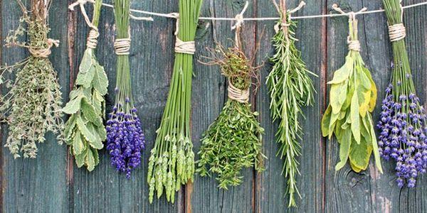 O Caldeirão: Onde obter ervas para utilização mágica?