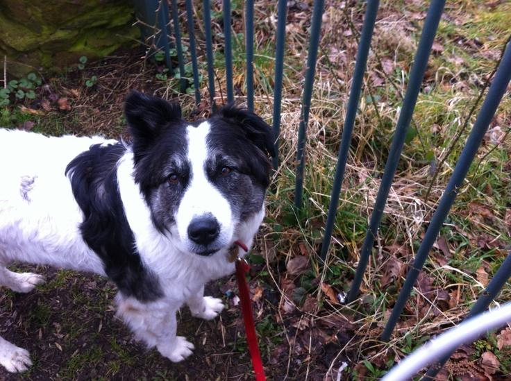 Wiccaweys Dog Rescue