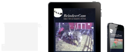 Reindeer Cam - Santa feeds them everyday at 5pm EST until November 16th.  Then, 11am, 6pm, and 9pm EST until Christmas!!