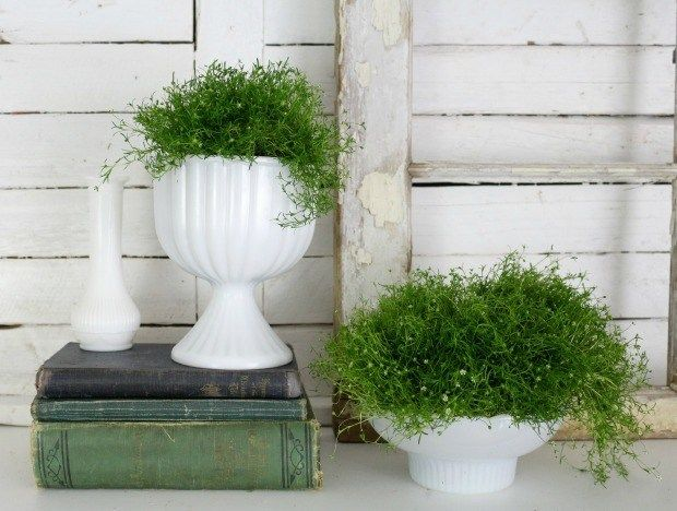 How to use live greenery in your space
