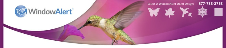 Hummingbird Decal,Custom Window Decals  These are awesome!!  Birds no longer hitting my windows!  :)