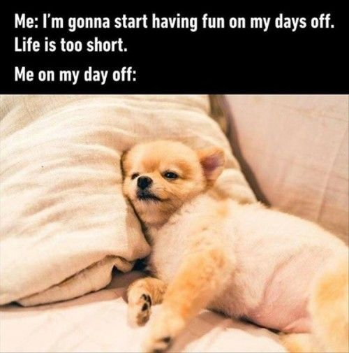 I M Gonna Start Having Fun On My Days Off Funny Work Jokes Morning Quotes Funny Tired Funny