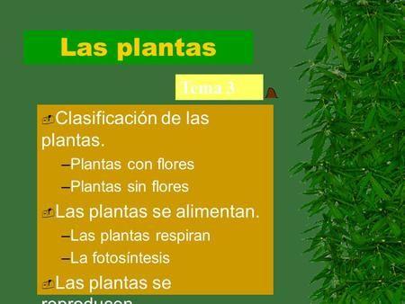 Las plantas Tema 3 Clasificación de las plantas.>