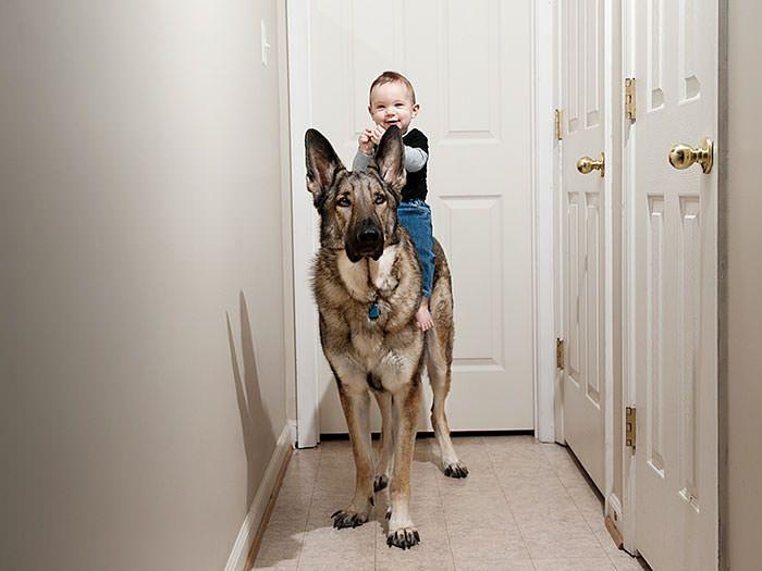 gros chien bebe 8