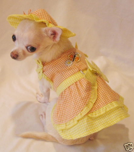 Dog Clothes/Sunshine Daisy Dog Dress Set/Chihuahua/York