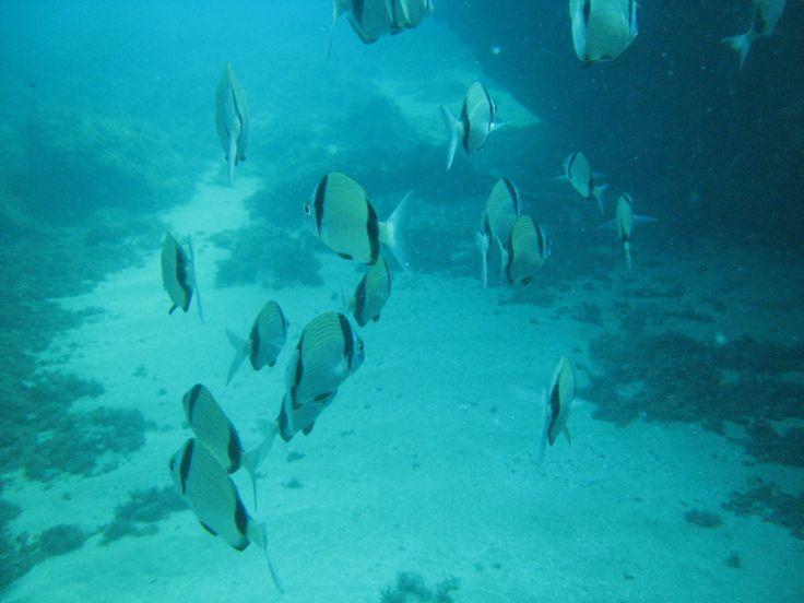 yo siempre digo que una inmersión en el mar es como un paseo por el campo, con la diferencia de que los animales no se esconden. Denia, Alicante