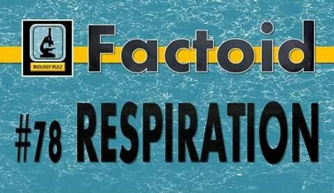 Did you know:  #Respiration (or #breathing) is the result of the contraction and relaxation of the #diaphragm. Your diaphragm in a thin sheet of #smooth #muscle that separates your #thoracic #cavity (which houses your heart and lungs) from your #abdominal cavity (which contains your stomach, liver, pancreas, and intestines). As the diaphragm contracts, then, it pulls downward. Read the full story at https://www.facebook.com/biologycoachonline/