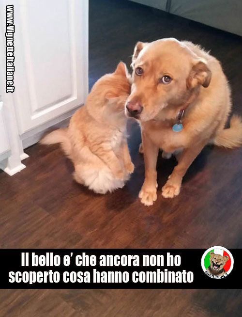 Clicca sull'immagine per visitare il sito. #Animali, #Cani, #Gatti  #Divertenti, #Funny, #Funnypics, #Humor, #Humour, #Immagini, #Immaginidivertenti, #Italiane, #Lol, #Meme, #Memeita, #Memeitaliani, #Memes, #Memesita, #Memesitaliani, #Umorismo, #Vignette