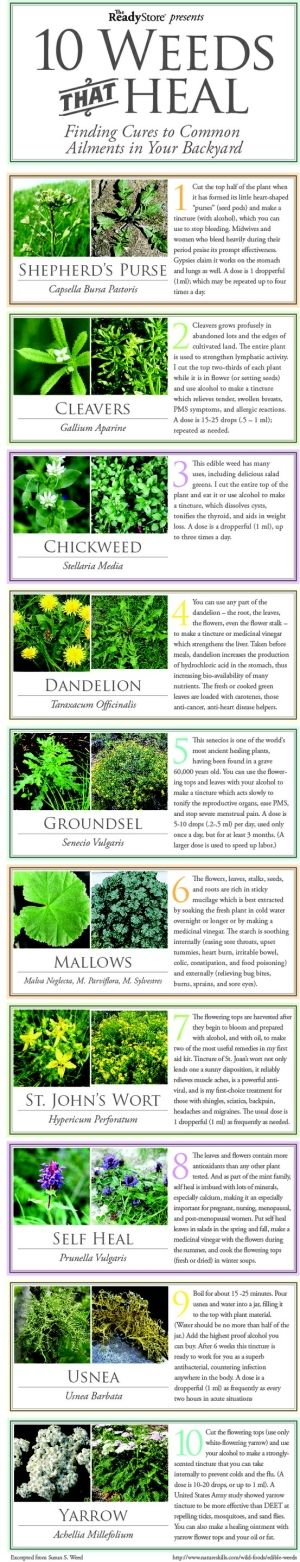 10 Weeds That Heal by flora