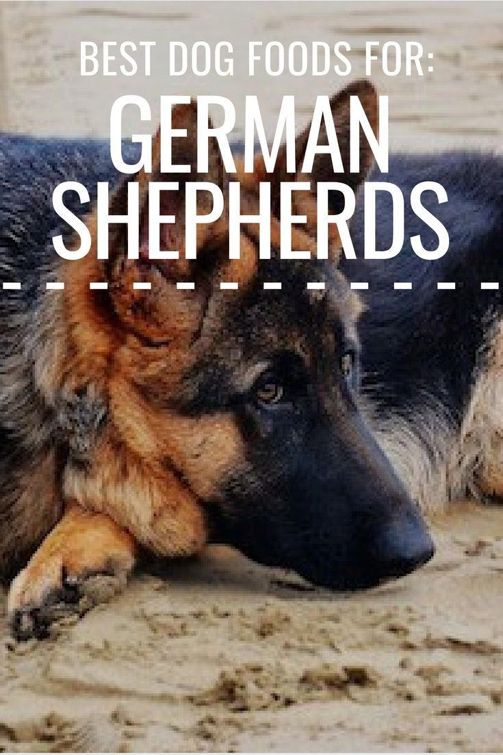 5 Best Dog Foods For German Shepherds Only The Best For Gsds