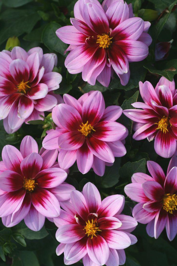 Nice Flower Tattoo Ideas For Women