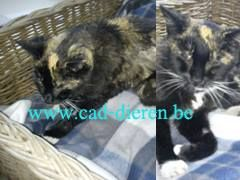 #GEVONDEN #kattin is blind mager, geschoren op de rug draagt vlooienhalsband #Kontich voorbij Sint Ritacollege 22-5-2014 http://users.telenet.be/coordinatie.dierenbescherming.antwerpen1/wr_cad/2014/wr_2014_gk_lapjes&schildpad.html Vind ik leuk ·  · Delen · 27 mei