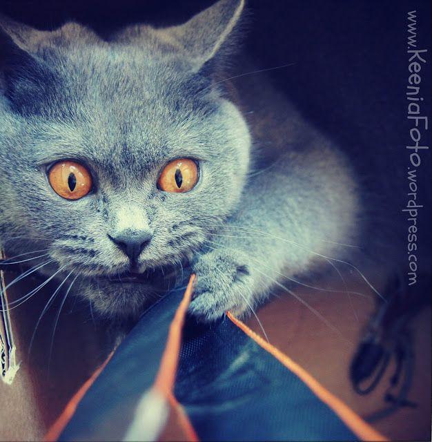 cat ;)