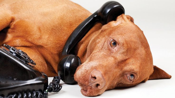 25 Crazy Things You May Not Realize About Telephones