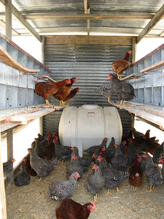Inside of a mobile egg laying coop | Chicken Little ...