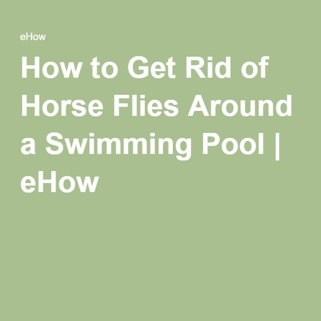 How To Get Rid Of Horse Flies Around A Swimming Pool