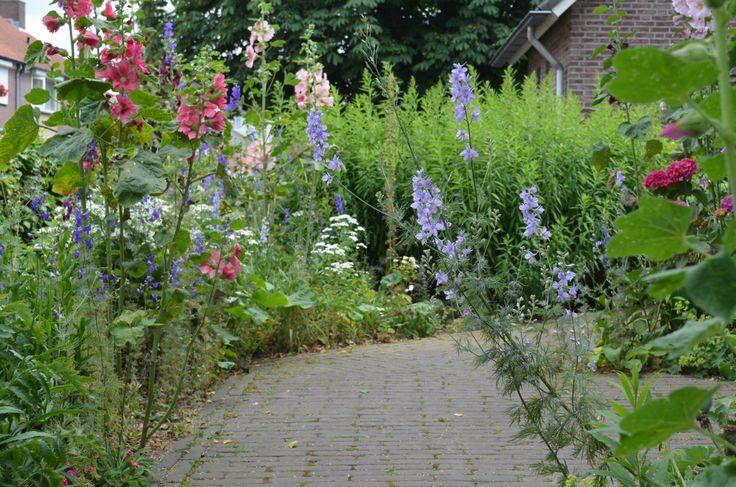 paadje met zomerbloemen