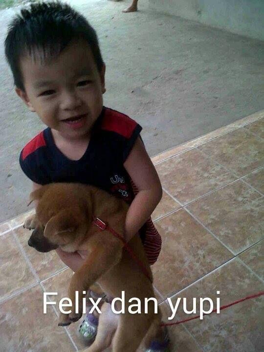 Foto kiriman Rina Thjia  Ini adalah anjing kesayangan Felix .namanya Yupi. Yupi adalah teman bermain felix kemana saja felix pergi bahkan saat nonton tv pun yupi duduk dipangkuan felix sambil menatap tv... #AnimalLoverEMCO