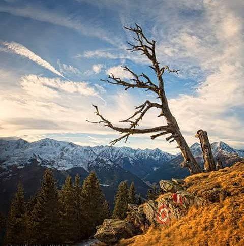 Basta un colle una vetta una costa. Che fosse un luogo solitario e che i tuoi occhi risalendo si fermassero in cielo. L'incredibile spicco delle cose nell'aria oggi ancora tocca il cuore. Io per me credo che un albero un sasso profilati sul cielo fossero dei fin dall'inizio. Cesare Pavese #aforismi #montagna #frasi #riflessione #mountainlifestyle #sky #landscape #Austria #mountainpassion #reflections #hikingundertheclouds #treeoflife #WonderMountain #wonderfullife #naturephoto #ig_shotz…