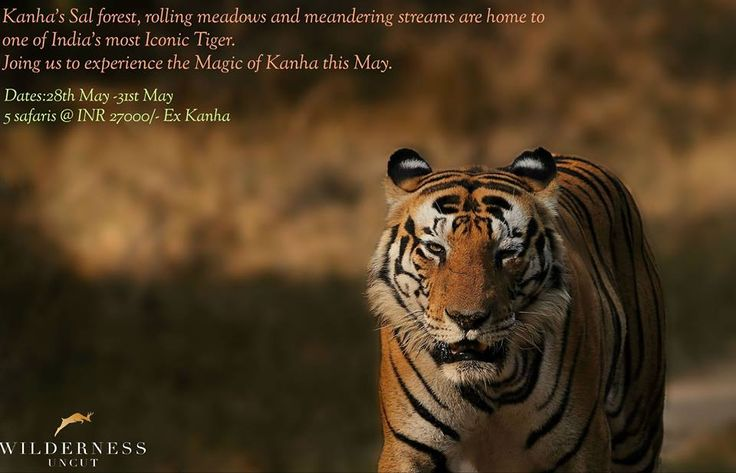 Experience the Magic of ‪#‎kanha‬ this May  For enquiries and bookings please write to Jason Fernandes at jason@equinoxinc.in and Anu Marwah at anumarwah1212@gmail.com  ‪#‎kanhanationalpark‬