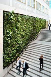 Green Fortune plantwall / vertical garden in office entrance / reception area. | Grüne Wand | Groene wand | Plantwall, Växtvägg, Green Fortune, Lawyers office, Stockholm, Sweden.