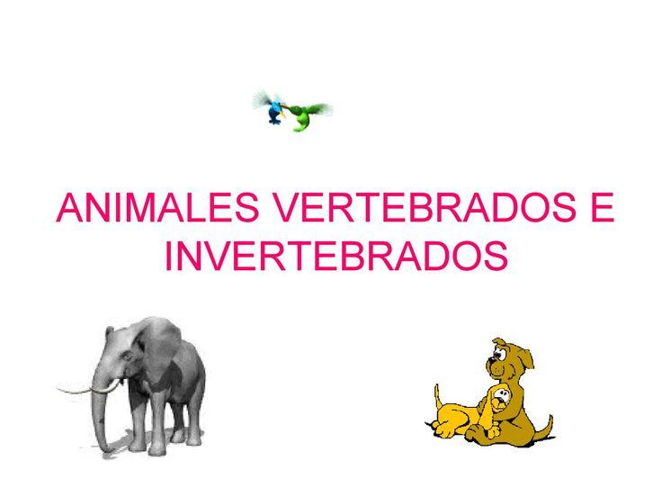 Animales Vertebrados Invertebrados