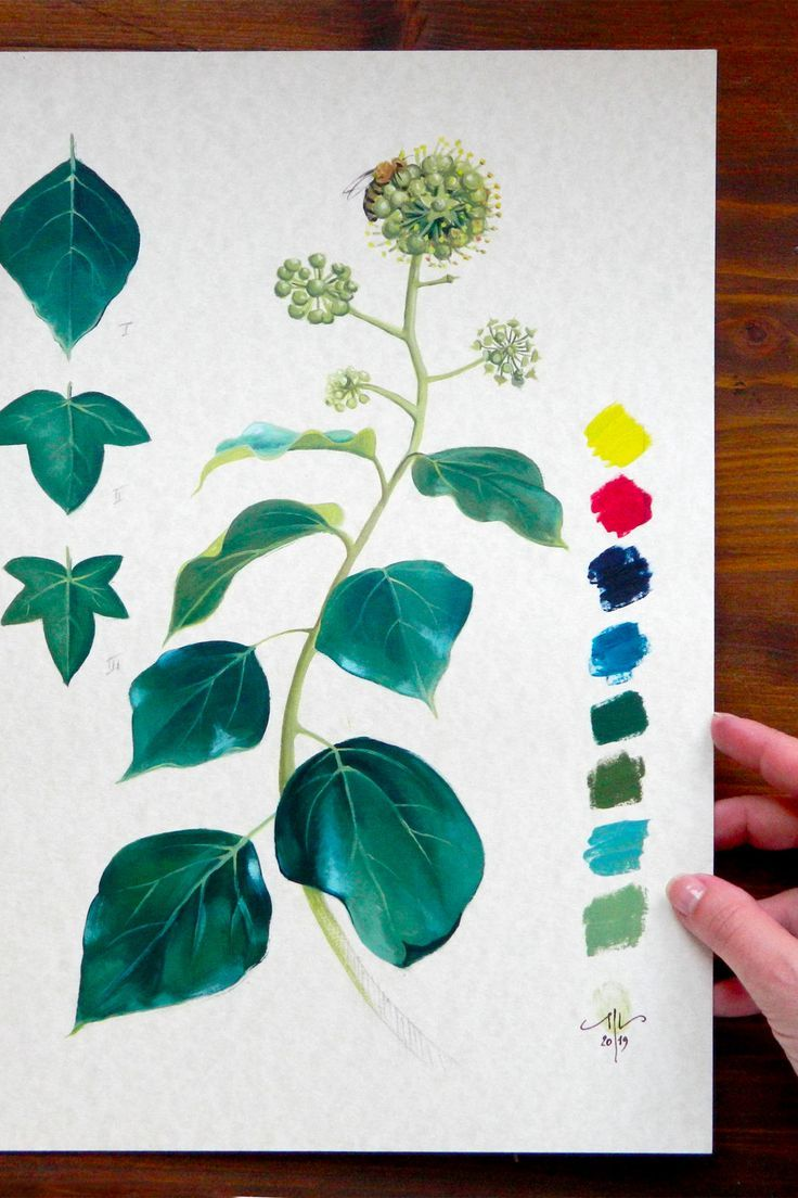 Minimalist Botanical Art English Ivy Original Illustration Oil