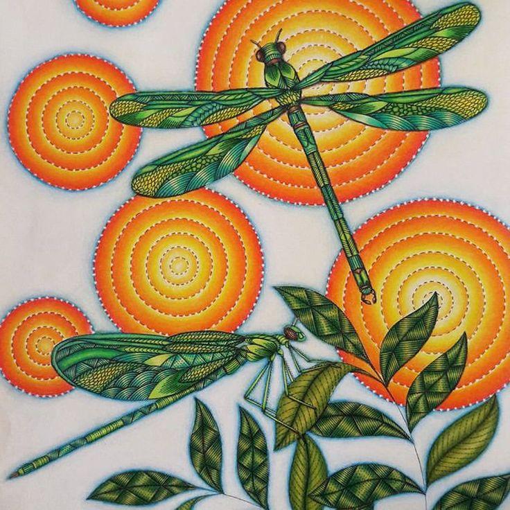 1005 Best Millie Marotta Colourings Images On Pinterest