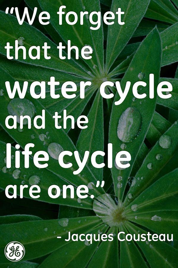 #water. 2013 Will Be The Snake Wateru0027s Year On Lunar Calendar. Letu0027s  Celebrate