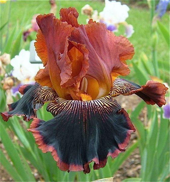 Les 2273 meilleures images du tableau jardin sur pinterest for Le jardin voyageur peter brown
