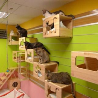 find this pin and more on cat room ideas
