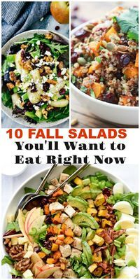 10 fall salads *all 5 star recipes!* that are so delicious you'll want to eat them right now instead of waiting for the holidays!