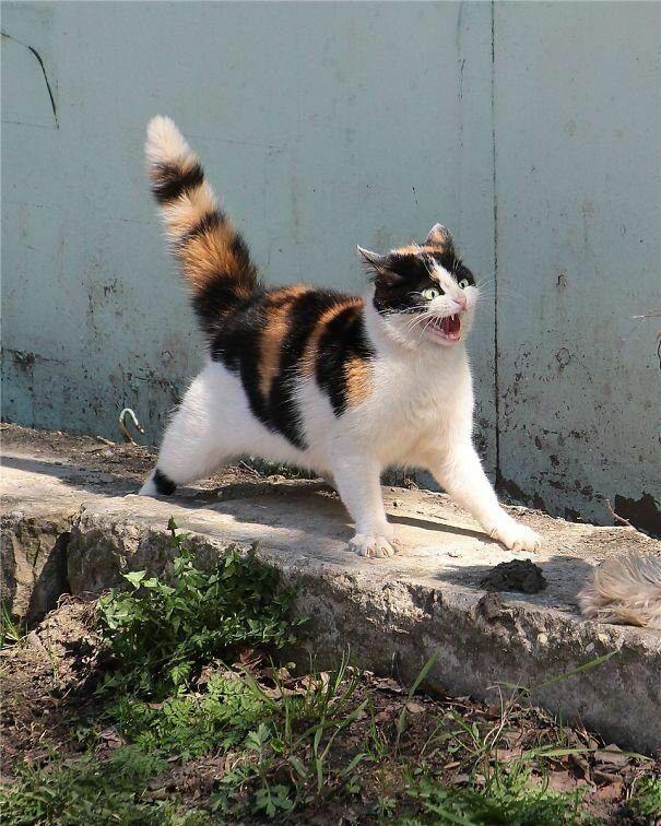 Котики просто созданы для драмы | Смешные фото кошек ...