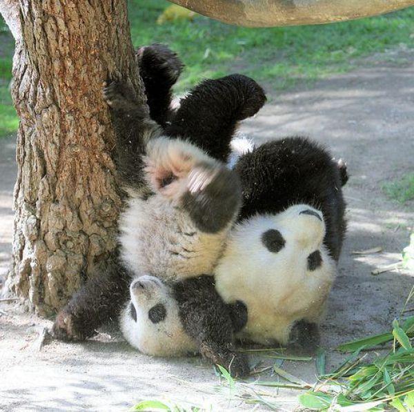 ¡Te dije que la rama no aguantaría!