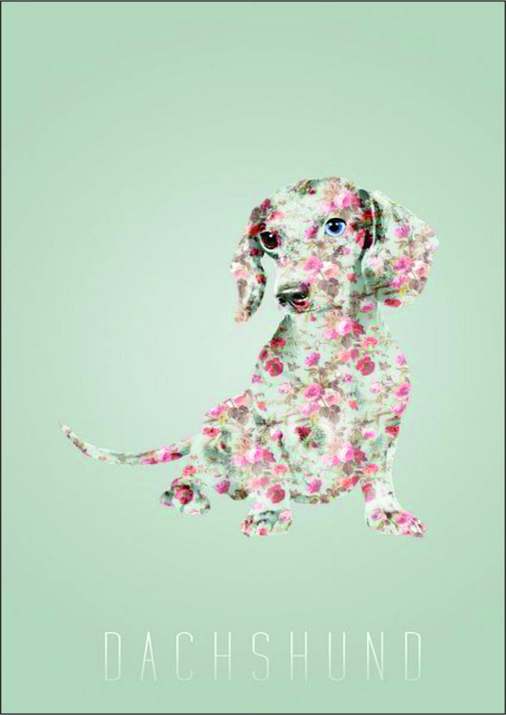 Flower Dachshund Set of 4 with envelopes. Blank inside Price: R60