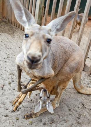 77 Best Busch Gardens Tampa Images On Pinterest Busch