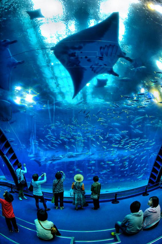 Georgia Aquarium - next to whale watching in Boston Harbor, this was the most awesome place that I've been.