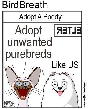 Adopt Unwanted Purebreds #shelter #adopt #pets #cat #dog# animalcartoon