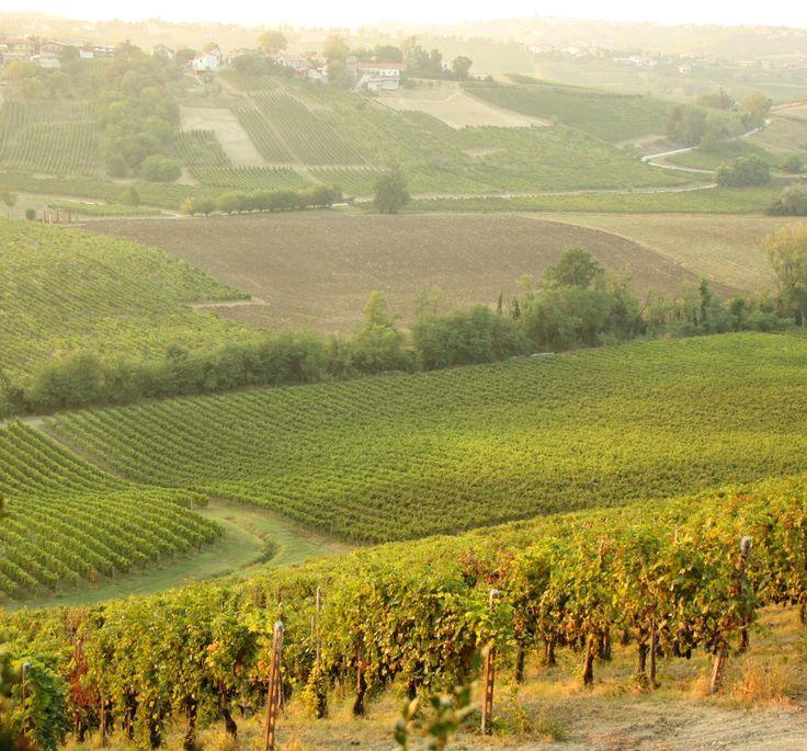 Vista dal Castello di Luzzano #vigneti #oltrepo #wine #winelovers  #vino #italia #landscape