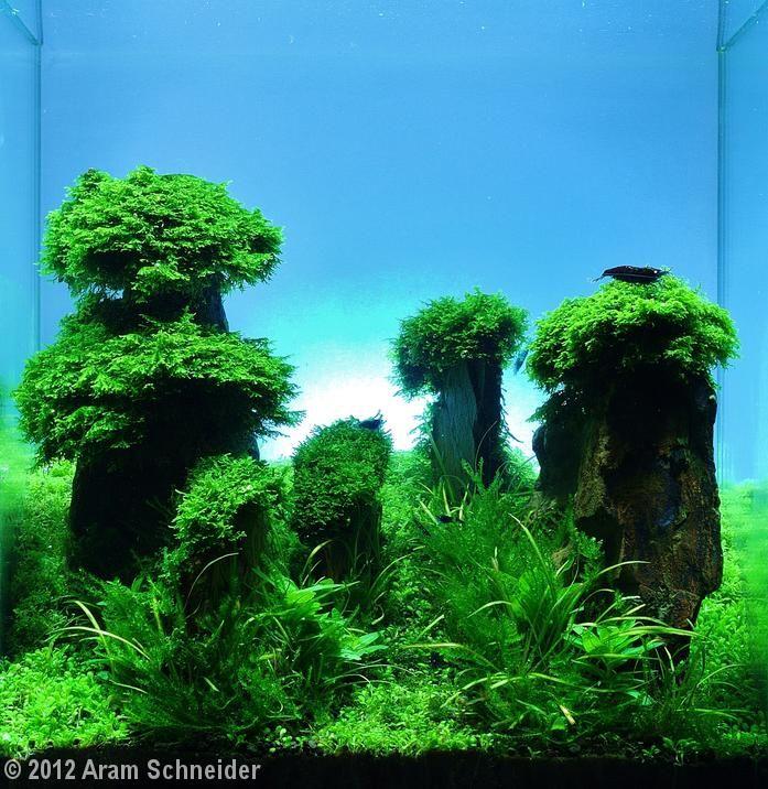 aquarium aquascape design ideas 36 best aquascaping tall tanks images on pinterest aquarium