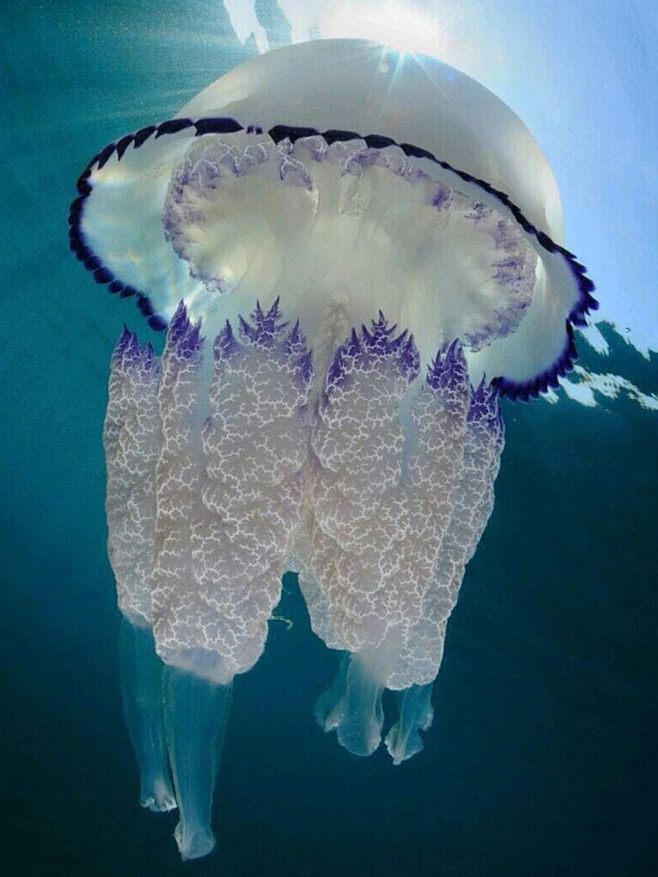 Карандашом, прикольные картинки медузы
