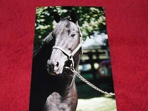 Play Fellow(1980)On The Sly- Play For Keeps By Run For Nurse. 4x5 To Count Fleet & Roman, 5x5 To Prince Rose. 22 Starts 9 Wins 6 Seconds 1 Thirds. $711,253. Won Travers S(G1), Blue Grass S(G1), Arlington Classic(G1), American Derby(G1), Donn H(G1), Super Derby(G1), Laurance Armour H (G3), Ben Ali H(G3), 3rd Everglades S(G3). Die In 2008.: