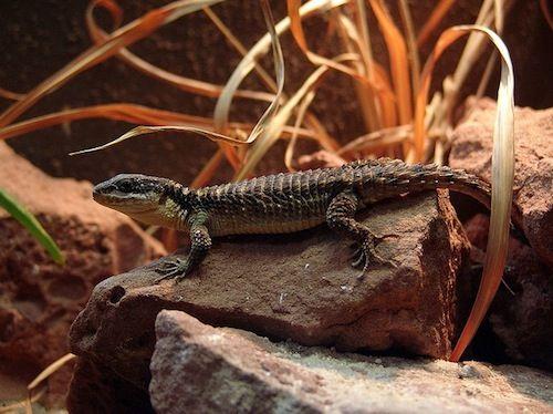 389 best images about Desert vivarium on Pinterest ...