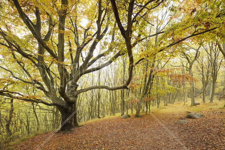 Autumn Trees in Stenshuvud, Sweden, Europe - Fototapeter & Tapeter - Photowall