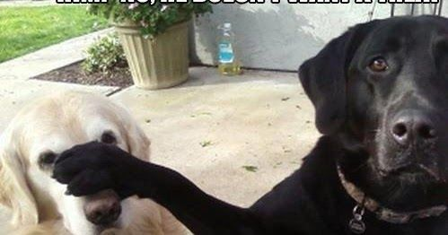 Funny Labrador Dog Meme Caption Joke Picture Photo - Him? No, he doesn't want a treat.  He says I can have two.