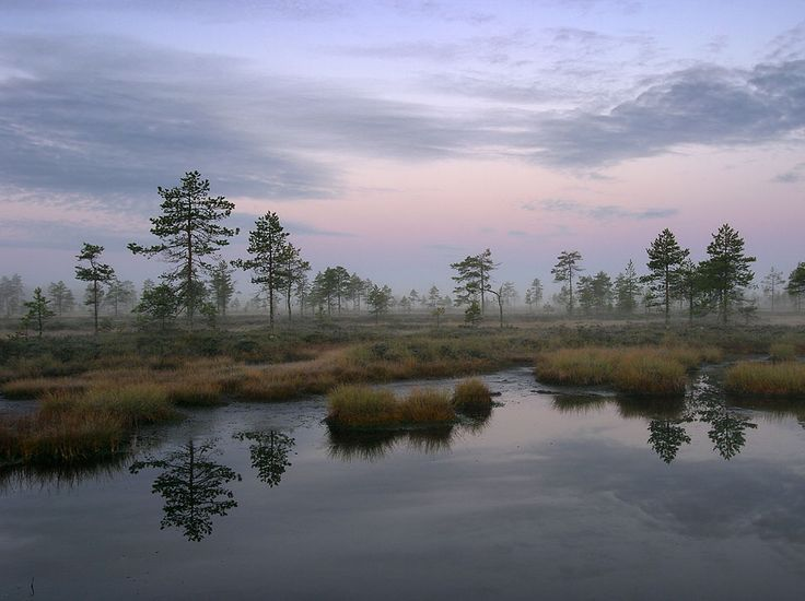Kauhaneva-Pohjankangas National Park. Photo: Timo Nieminen