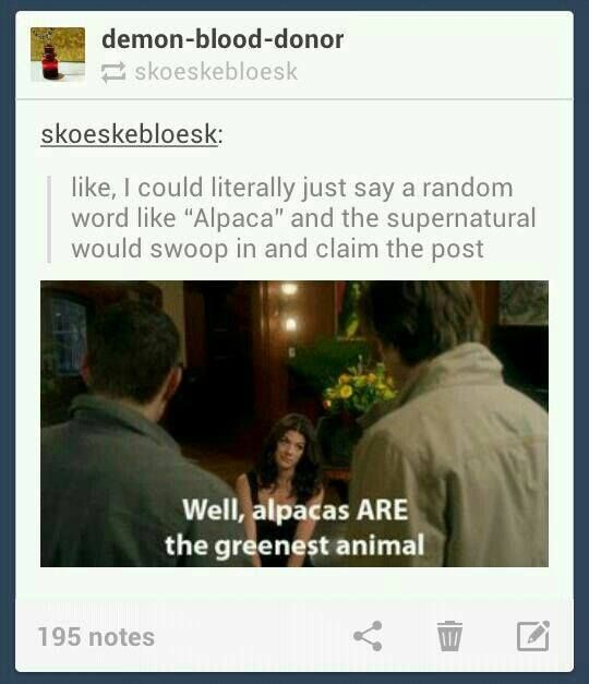 Not even in the supernatural fandom but this too good