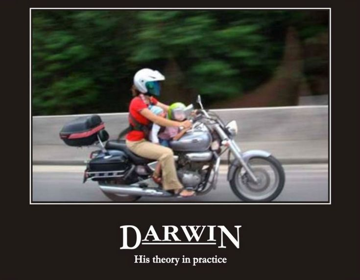 Best Darwin Awards Images On Pinterest Car Hilarious And Ideas - 22 people surely win darwin award